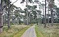 Hoge Veluwe National Park, Otterlo - panoramio (3).jpg