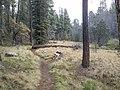 Horton Creek Trail, Payson, Arizona - panoramio (12).jpg