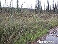 Hosford Creek Water Quality Testing, Yukon-Charley Rivers, 2003 2 (4e4923cb-202d-44b2-888a-65b1731c5a0b).jpg