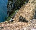 Huayna Picchu Terrass.jpg