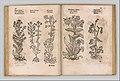 I) Herbarum, Arborum, Fructium, Frumentorum, c. 1540 ... II) De Speciali quarundam plantarum, Frankfurt- Egenolff 1552 MET DP327884.jpg