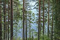 IMG 8262 Punkaharju, Finland (15022928955).jpg