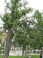 Ihlamur Palace Garden 06.jpg