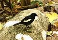 Ile Aride - Oiseau (43).JPG