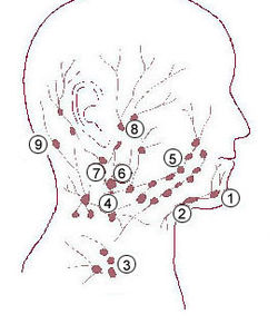 Enlarged Posterior Auricular Lymph Node http://en.wikipedia.org/wiki/Lymphatic_System_Assessment