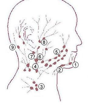 Supraclavicular lymph nodes - Image: Illu quiz hn 03