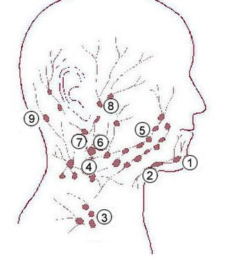 Submental lymph nodes - Image: Illu quiz hn 03