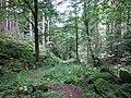 Im Steintal oberhalb von Lautenbach .jpg