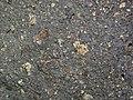 Impact breccia (Sandcherry Member, Onaping Formation, Paleoproterozoic, 1.85 Ga; High Falls roadcut, Sudbury Impact Structure, Ontario, Canada) 15 (47759294611).jpg