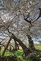 Ishibe Ikkimachi Ōaza Yahata, Aizuwakamatsu-shi, Fukushima-ken 965-0003, Japan - panoramio (1).jpg