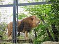 Ishikawa Zoo - Animals - 35 - 2016-04-22.jpg