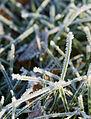 Jäätynyt ruoho.JPG