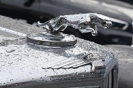 Leaper of a 3½ litre Jaguar Mark V drophead coupé.