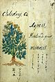Japanese Herbal, 17th century Wellcome L0030059.jpg