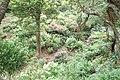 Jardín botánico de Wellington - panoramio.jpg