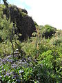 Jardín canario 80.JPG