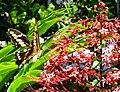 Jardim Village do Dendê, Gamboa do Morro,Cairu - Anna Maria Innocenzi -N° 8 borboleta.jpg