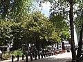 Jardin des plantes de Nantes entrée avec Ficus.jpg