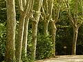 Jardines de Sabatini, árboles, Madrid, España, 2015.JPG