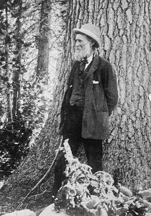 American conservationist John Muir (1838-1914)