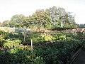 Johnson Nurseries - geograph.org.uk - 270587.jpg