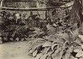 KITLV A930 - Kwekerij in de tuin van een Europese woning bij Soerabaja, KITLV 44305.tiff