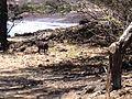 Kahului-Wailuku, HI, HI, USA - panoramio (1).jpg