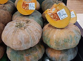 Calabaza type of pumpkin