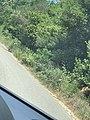 Kepi i Rodonit, Gjiri i Lalezit - Durres. 36.jpg