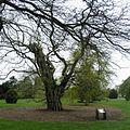 Kew Gardens 0475.JPG