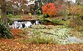 Kew Gardens Water Lily Pond, London 3269 1280.jpg