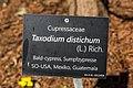 Klagenfurt Villacher Vorstadt Botanischer Garten Taxodium distichum Tafel 29012018 2493.jpg