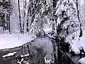 Kleśnica zimą.jpg