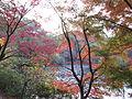 Kobe Municipal Arboretum in 2013-11-16 No,18.JPG