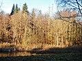 Kohlweiher - panoramio (1).jpg