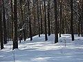 Koniec zimy w połowie marca - Wolica las - 05 - panoramio.jpg