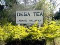 Ladang teh nalapak.png