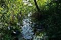 Lago di Massaciuccoli - vegetazione acquatica.jpg