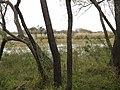 Laguna llenándose - panoramio.jpg