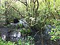 LakeVallum-alder swamp-29.5.16-OleFrimer.jpg