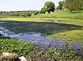 Lake in Pinbury Park - geograph.org.uk - 464899.jpg