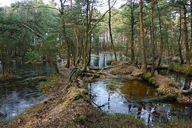 Landschaftsschutzgebiet Oldhorster Moor (LSG-H46) (02).JPG