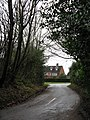 Lane Through The Trees - geograph.org.uk - 1603921.jpg