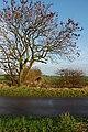 Lane near Sproatley - geograph.org.uk - 1583028.jpg