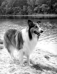 lassie neuer film