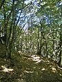 Le Cavallaie-paesaggio 23.jpg