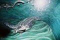 Leatherbacksea turtleModelBelfastMuseum.JPG