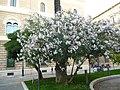 Lecce 056.jpg
