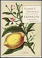 Lemon - Bugbee & Brownell, fine flavoring extracts Providence, Rhode Island.jpg