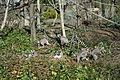 Lemurs @ Parc Zoologique de Paris (Zoo) @ Paris (26253589682).jpg